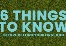 Home-Six-Things-to-Know-Before-Getting-Your-First-Dog_